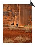 Canyon Dwellers Prints by David Drost