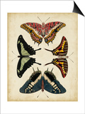 Display of Butterflies II Posters by  Vision Studio
