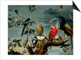 Concert of Birds Prints by Frans Snyders