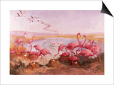 Pink Flamingoes Prints by  Syde