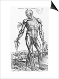 "Anatomical Study, Illustration from ""De Humani Corporis Fabrica"", 1543 Kunstdrucke von Andreas Vesalius"