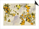 Orange Trees, 1863 (W/C, Pen and Ink over Graphite on Heavy Wove Paper) Prints by Edward Lear