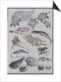 Undersea Creatures, from a Manga (Colour Woodblock Print) Plakater af Katsushika Hokusai
