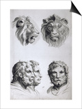 Similarities Between the Head of a Lion and a Man Prints by Charles Le Brun