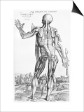 "Anatomical Study, Illustration from ""De Humani Corporis Fabrica"", 1543 Print by Andreas Vesalius"