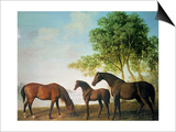 Shafto Mares and a Foal Poster by George Stubbs