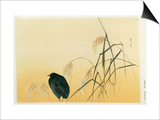 Blackbird, Edo Period Prints by  Japanese School