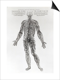 Nervensystem Kunstdrucke von Andreas Vesalius