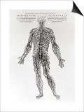 Nervous System Prints by Andreas Vesalius