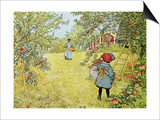 The Apple Harvest Art by Carl Larsson