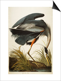 Great Blue Heron Poster by  Audubon