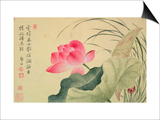 Lotus Flower, by Yun Shou-P'Ing (1633-90), from an 'Album of Flowers', (W/C on Silk Backed Paper) Posters by  Yun Shouping