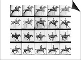 """Man and Horse Jumping, from """"Animals in Motion"""", London, Published 1907 Pósters por Muybridge, Eadweard"""