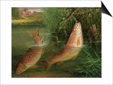 Trout at Winchester Kunstdrucke von Valentine Thomas Garland