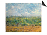 Wheatfield with Lark, 1887 Prints by Vincent van Gogh