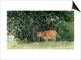 Cow in Pasture, 1878 Print by Winslow Homer