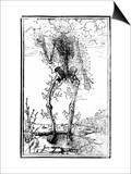 Vascular System of the Body Kunstdruck von Andreas Vesalius