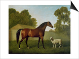 Dungannon, the Property of Colonel O'Kelly, Painted in a Paddock with a Sheep, 1793 Prints by George Stubbs