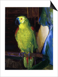 Parrot, 1915 Poster by George Wesley Bellows