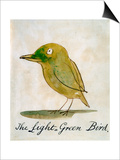 The Light Green Bird, from Sixteen Drawings of Comic Birds Posters by Edward Lear