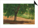 Study of Light and Shade (Oil on Card Laid Down on Canvas) Posters by Rosa Bonheur