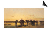 African Elephants Prints by Charles Emile De Tournemine