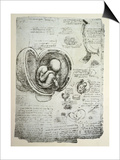 The Human Foetus in the Womb, Facsimile Copy Posters by  Leonardo da Vinci
