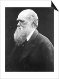 Charles Darwin, C.1870 (B/W Photo) Posters by Julia Margaret Cameron