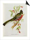 Trogon Ambiguus Posters by John Gould