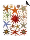 Starfish Art by  English School