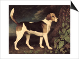Ringwood, a Brocklesby Foxhound, 1792 Posters by George Stubbs