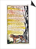 The Tyger', Plate 36 (Bentley 42) from 'Songs of Innocence and of Experience' (Bentley Copy L) Posters by William Blake