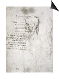 Head of an Old Man in Profile, Facsimile Copy Posters by  Leonardo da Vinci