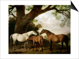 Two Shafto Mares and a Foal, 1774 Prints by George Stubbs