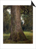 Study of the Trunk of an Elm Tree, circa 1821 Posters by John Constable