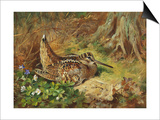 A Woodcock and Chicks, 1933 Art by Archibald Thorburn