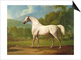 """Mambrino"", C.1790 Posters by George Stubbs"