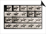 "Jockey on a Galloping Horse, Plate 627 from ""Animal Locomotion,"" 1887 Prints by Eadweard Muybridge"