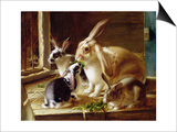 Long-Eared Rabbits in a Cage, Watched by a Cat Poster by Horatio Henry Couldery