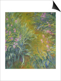 Iris Print by Claude Monet