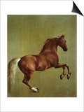 Whistlejacket, 1762 Prints by George Stubbs