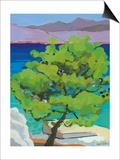 Pine Tree, 2010 Posters by Sarah Gillard