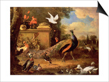 Peacocks and Other Birds by a Lake Posters by Melchior de Hondecoeter