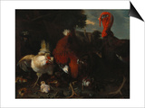 A Hen, Rooster and Turkey in a Farmyard Posters by Melchior de Hondecoeter