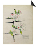 Blackthorn, Chiddingstone, Kent, 1910 Posters by Charles Rennie Mackintosh