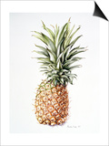 Pineapple, 1997 Prints by Alison Cooper