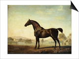 Sweetwilliam', a Bay Racehorse, in a Paddock, 1779 Poster by George Stubbs