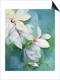 Magnolia Dedudata Posters by Karen Armitage