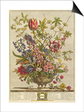 February, from 'Twelve Months of Flowers' by Robert Furber (C.1674-1756) Engraved by Henry Fletcher Poster by Pieter Casteels