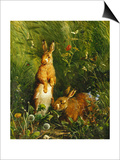 Hares, 1878 Art by Olaf August Hermansen